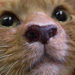 サクライキビ-外鼻孔に血腫様ポリープ2014-09-01 12.05.12